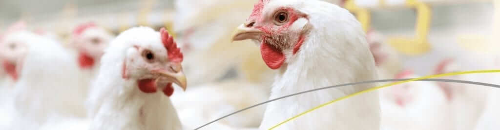 Improve your poultry production performance