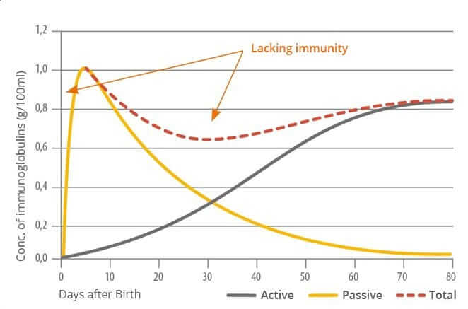 Immune status of the young pig