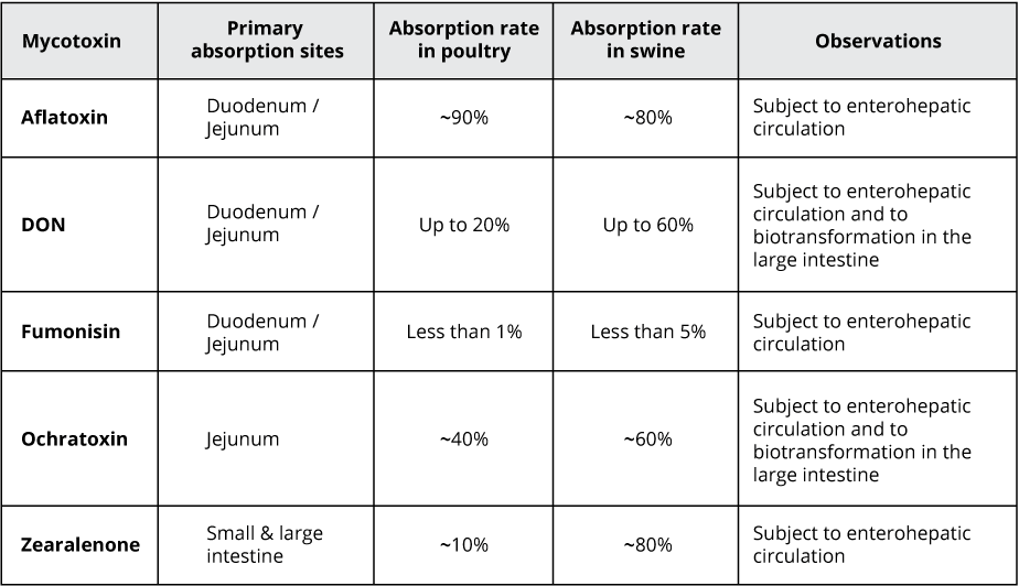 Rate and absorption sites of different mycotoxins