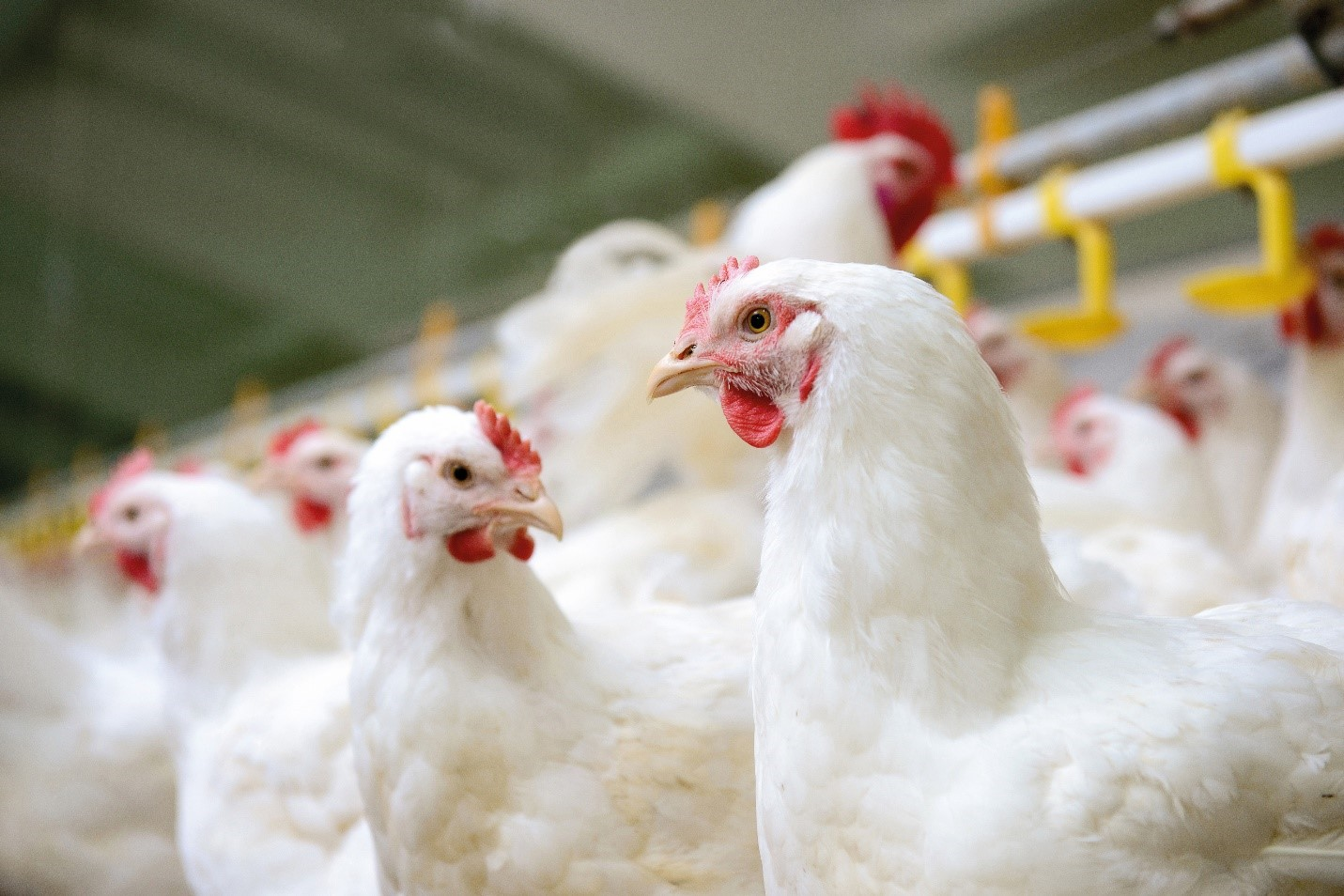 Mold growth reduces the nutritional value of feed, which affects animal health and performance