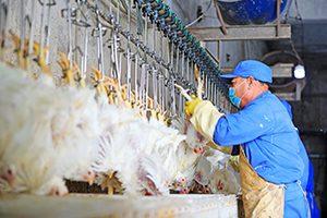 china corona animal production covid