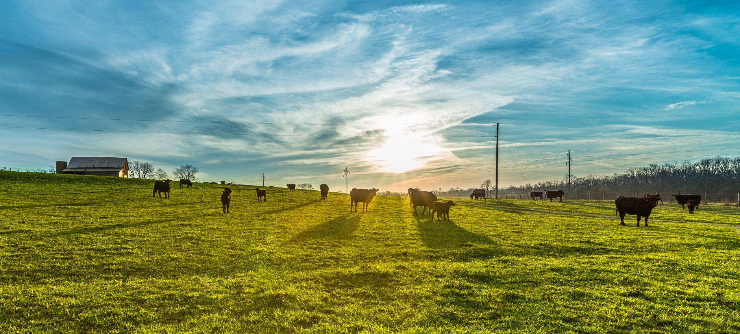 farm sustainability