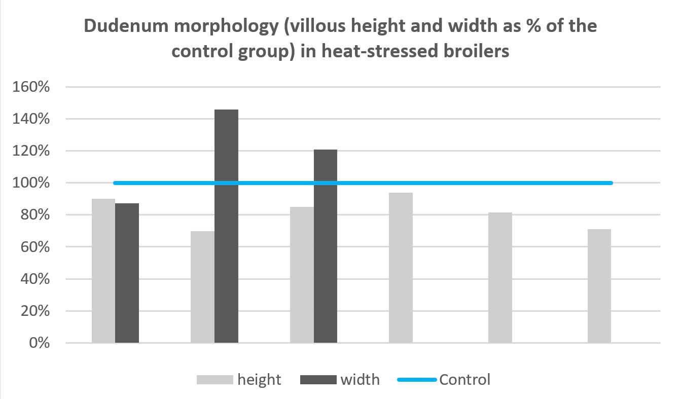 Figure 4 - Dudenum morphology (villous height and width as % of the control group) in heat-stressed broilers
